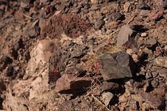 5R6K2799 (ATeshima) Tags: arizona nature havasu