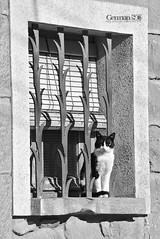 I Thought I Saw a Pussy Cat (German SC) Tags: street urban bw primavera window animal spring catalonia finestra urbana catalunya carrer tamron55200 atravsdelvisor sonyalphadslta65 germansc
