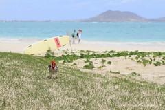 On the beach (Hitoshi.K) Tags: travel bird beach nature animal canon landscape hawaii 7d kailua