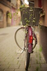 In the basket (Caropaulus) Tags: 50mm 100bicycles 100bicyclesproject basket bicycle bike blur bokeh ivy lierre minolta panier plant rokkor rue street velo vintage