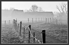 Farm in the Mist (genf) Tags: morning bw white mist black tree grass fence early farm sony shed atmosphere boom gras zwart wit morgen amstel hek boerderij zw schuur bss ouderkerk sfeer tmt a700 vroege ouderkerkerplas