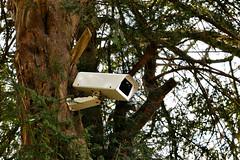 CCtreeV (lown_c) Tags: brown man tree green nature digital nikon cctv security made hidden d3100