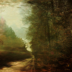 """Road to happiness (Mara ~earth light~) Tags: road trees light shadow inspiration texture nature photoshop transformation time happiness creativecommons moment intuition magicalmoments fantasticnature amiamoci absolutegoldenmasterpiece photographymypassion mara~earthlight~ lovelymotherearth"""" artcityart"""