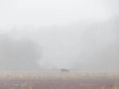 03-03-foggy bog-38.jpg (Chris I.) Tags: dog mist fog bog panny cranberrybog fz150