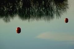 Bal' (Agns Willette (noushka7)) Tags: nature rouge eau lac bleu arbres nuages reflets paysages boule gers midipyrnes lislejourdain cratitudesnolimits lacdelislejourdain