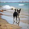 Beach Day! - 10/52