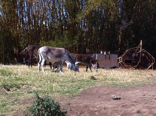 "Baby donkey • <a style=""font-size:0.8em;"" href=""http://www.flickr.com/photos/28749633@N00/6825150128/"" target=""_blank"">View on Flickr</a>"