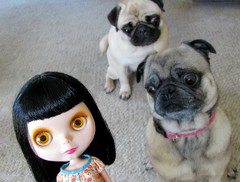 frank & the pugs