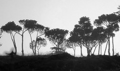 The dream (vat_i_can) Tags: trees italy rome contrejour appia