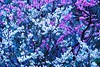 Plum Trees:梅林 (love_child_kyoto) Tags: park travel flowers tree garden march spring nikon kyoto gardening sigma 京都 花 自然 旅行 fragrance 公園 梅園 梅 pinkflowers 春 nishijin 三月 hanamachi 庭園 白梅 plumflowers 紅梅 園芸 kitanotenmangushrine 花街 上七軒 ニコン 梅林 春の京都 京都の春 ネイチャー シグマ 芳香