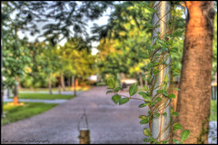 The Home Straight (Meremail) Tags: street trees buch twist brisbane pole curly odc1 ourdailychallenge