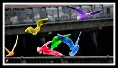 Rainbow seagulls! (Jainbow) Tags: seagulls rainbow harbour hard portsmouth jainbow