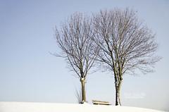 Soledad / Solitude (Ana Guisado) Tags: trees winter snow germany bench bayern árboles nieve banco alemania invierno baviera