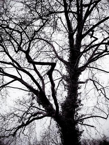 sky tree nature leaves germany landscape deutschland blackwhite ast branch cityscape natur himmel nrw dailylife schwarzweiss blätter ruhrgebiet baum dortmund 2012 ruhrpott 366 m43 mft project365 cmount micro43 olympuspenepl1 wesley24mmf14cctv