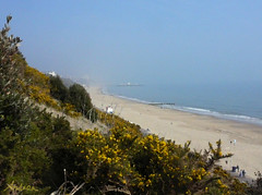 Gorse on the cliffs (Durley Beachbum) Tags: cliff dorset bournemouth gorse ulexgallii