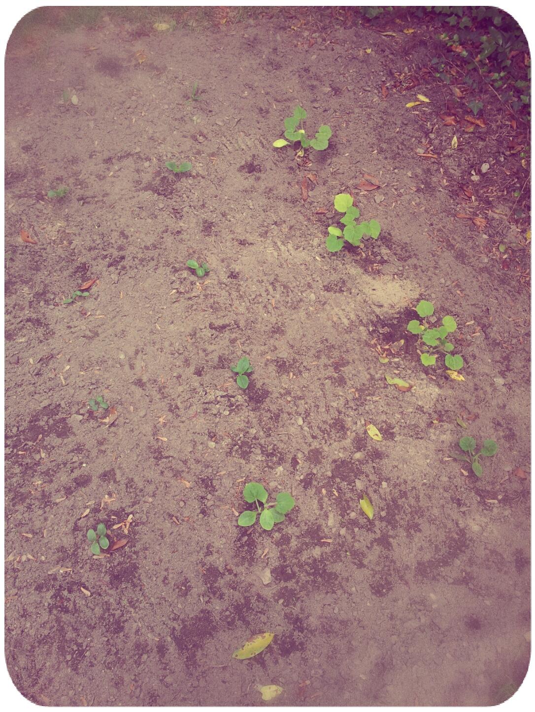 2012-03-30 13.51.23 - Melissa,Round.jpg