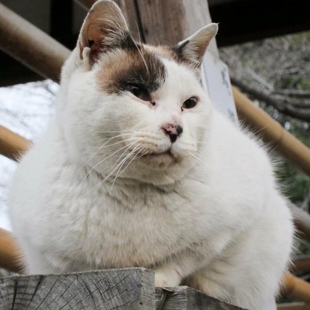 Today's Cat@2012-03-11