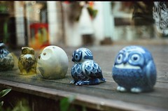 (say-fo) Tags: china city travel winter streets color film shanghai journey owl owls zenith