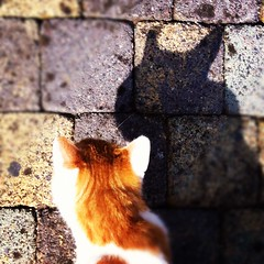 Catman, or is it Batcat? (Hilco666) Tags: shadow cat kat ears batman catman joep hilco666 instagram