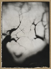 (NooFZz) Tags: bw landscape monocle 9x12 surrreal photographicpaper paperpositive bulldog4x5