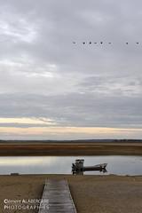 Le vol d'oies cendrées - Lac du Der (52) (Clément Alabergère- landscape architect) Tags: nikon eau lac vol soirée migration paysage barge ponton lacduder oiecendrée d700