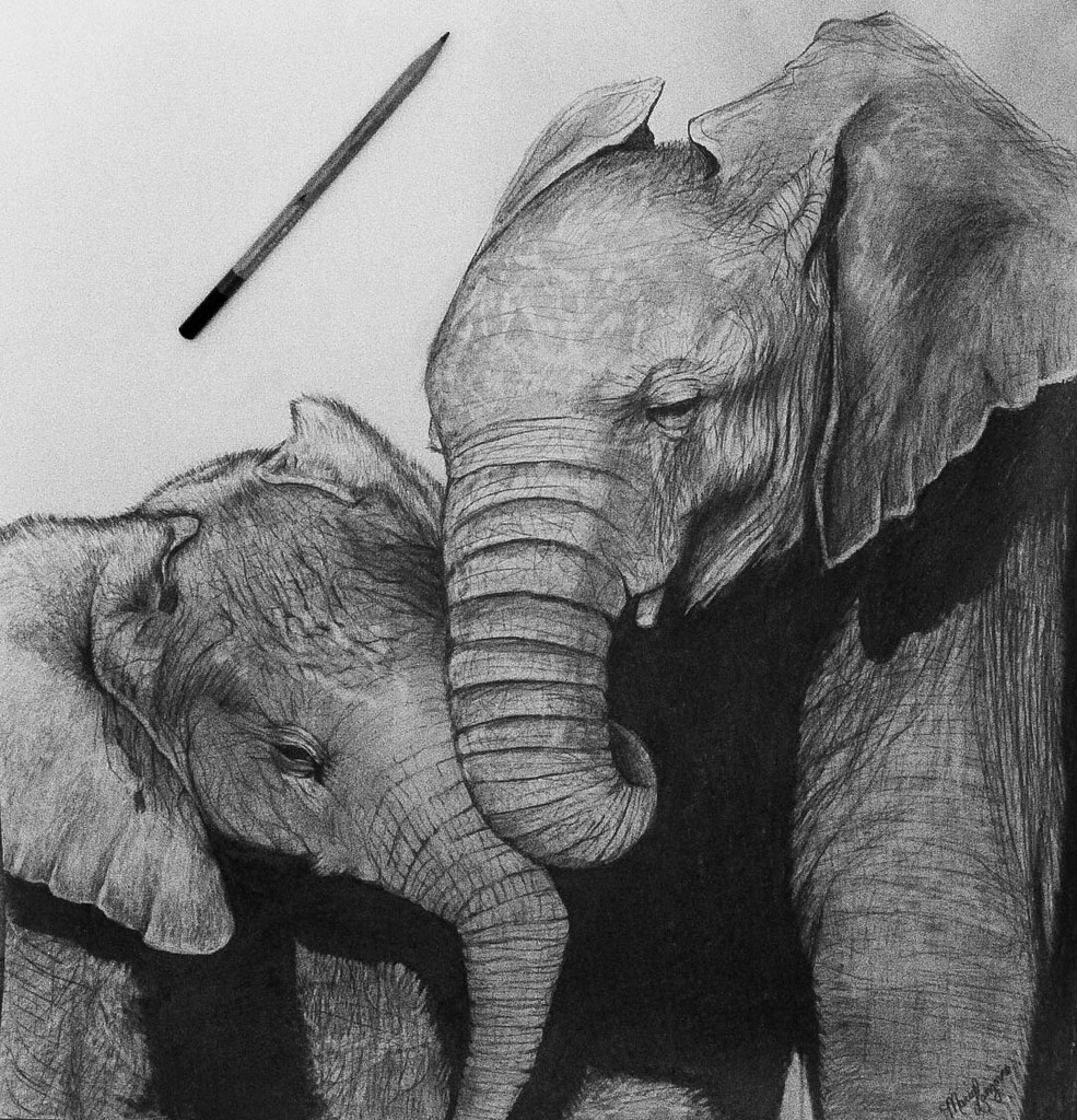 The World's Best Photos of elephant and realistic - Flickr ... Realistic Elephant Drawing