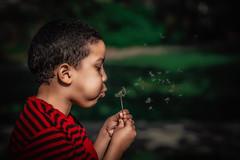 Wind Blow (iamjoelcris) Tags: flowers boy garden blow dandelion queens joelcris joelcriscreativemedia iamjoelcris flicksbyjc
