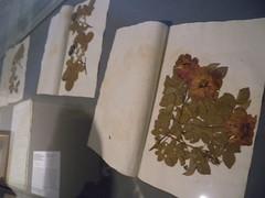 20160505_Baden_28 (weisserstier) Tags: austria sterreich exhibition baden niedersterreich ausstellung loweraustria habsburger kaiserhaus gartenmanie