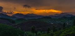 Sunset at Munnar (Sunith) Tags: sunset panorama estate tea sony kerala munnar godsowncountry mirrorless