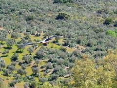 Flying away (rgrant_97) Tags: portugal nature natureza abril alentejo fronteira alterdocho
