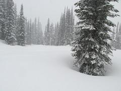 IMG_2422 (Yuek Hahn) Tags: snow washington paradise snowshoeing mtrainier mtrainiernationalpark piercecounty