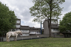 Harrow Manorway Horse - Thamesmead (James D Evans - Architectural Photographer) Tags: horse london architecture concrete modernism peabody brutalism modernist brutalist redevelopment thamesmead londonarchitecture thamesmeadsouth peabodylondon peabodyhomes