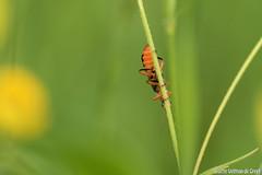 DN9A8677 (Josette Veltman) Tags: macro nature canon bug natuur bugs photowalk lente zwolle landschap insecten ivn westerveldsebos photowalkzwolle