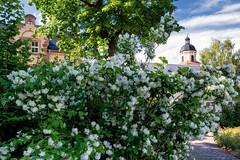 Bad Salzungen_SAM_2132 (milanpaul) Tags: juni germany deutschland thringen sonnenuntergang alt sommer stadt architektur fachwerk historisch 2016 badsalzungen samsungnx300m