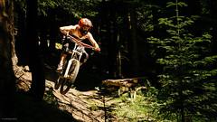 Into the light (25/52) (andrzejsykut) Tags: park bike downhill gravity dh biking mtb antidote lifeline koninki