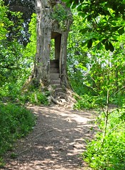 Ellesmere, May 2016 (wonky knee) Tags: lake mere beech stairwaytoheaven wildfowl ellesmere sculpturetrail ukshropshire