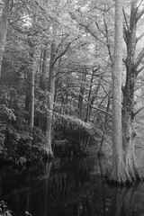 Amongst The Cypress Trees (thiaacorn) Tags: lakescape landscape bw calm tranquility tranquil peaceful cypresstrees bayou water lake trees