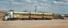 CURLEY BOYS RETURN TO BASE (Paulo660) Tags: kenworth road train cattle livestock truck australia bulls heifer bullock cow cows