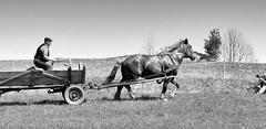 5856 Ursprngliches Masuren / Polen; Bauer mit Pferd und Wagen auf der Wiese. (stadt + land) Tags: wiese polen pferd masuren wagen ehemaliges romantisch pferdefuhrwerk ursprnglich seenlandschaft woiwodschaft ostpreusen