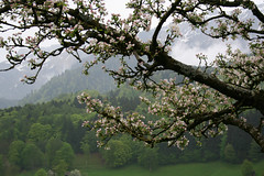 Spring in the swiss alps (pixelshoot) Tags: switzerland berneroberland jungfrauregion naturemountainsalps