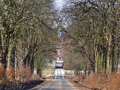 oak land (JoannaRB2009) Tags: blue trees winter sky sun snow nature sunshine germany landscape sunny natura oaks zima niebieski śnieg hesse słońce przyroda niebo drzewa krajobraz dęby beberbeck flickrstruereflection1