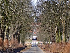 oak land (JoannaRB2009) Tags: blue trees winter sky sun snow nature sunshine germany landscape sunny natura oaks zima niebieski nieg hesse soce przyroda niebo drzewa krajobraz dby beberbeck flickrstruereflection1