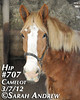 Hip #707 (Rock and Racehorses) Tags: amish belgian camelot draft workhorse feedlot ska0745