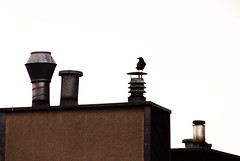 Observe (C_MC_FL) Tags: vienna wien roof chimney urban house building bird animal silhouette canon photography eos austria sterreich fotografie looking haus crow tamron dach gebude tier vogel krhe beobachten umris schauen rauchfang stdtisch fav10 kontur 18270 60d b008 wildlifewednesday