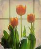 textured tulips (Rex Montalban Photography) Tags: texture tulips rip whitneyhouston hss rexmontalbanphotography sliderssunday lenabemanna