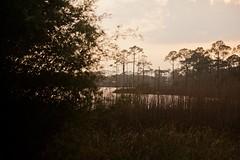 FLORIDA1-49