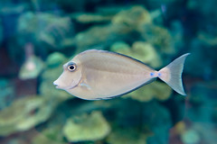 IMG_3841.jpg (kntrty) Tags: fish aquamarine   tropicalfish