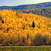 Golden sunshine (HDR)