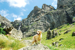 (.:: Maya ::.) Tags: dog mountain rock standing golden waterfall outdoor retriever balkan         mayaeye mayakarkalicheva