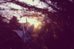 (~Wisteria~) Tags: morning sun macro tree pine canon paper origami dof bokeh crane curves gimp flare friday